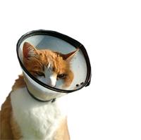 animal health oceanside vet