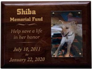 shiba memorial fund